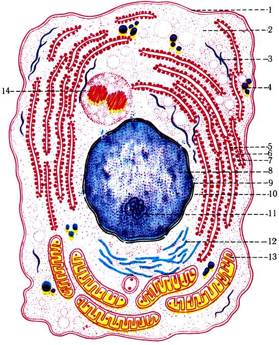 Схема субмикроскопического