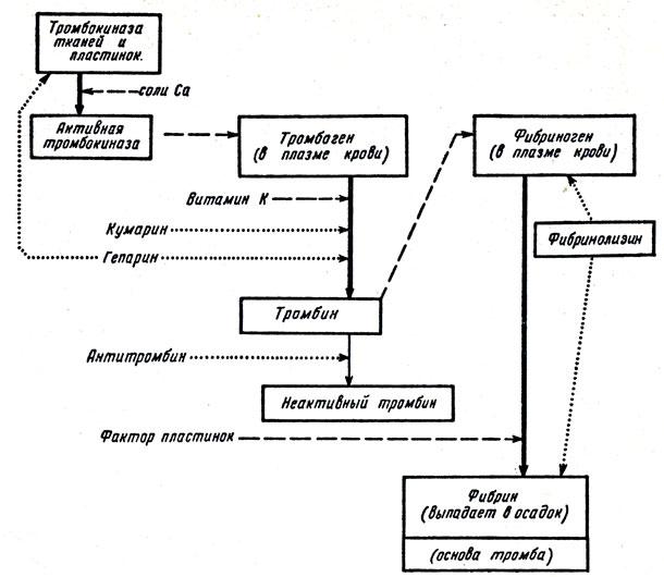 Упрощенная схема свертывания