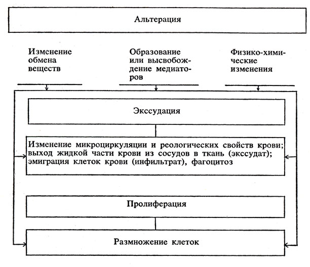 Схема развития воспаления