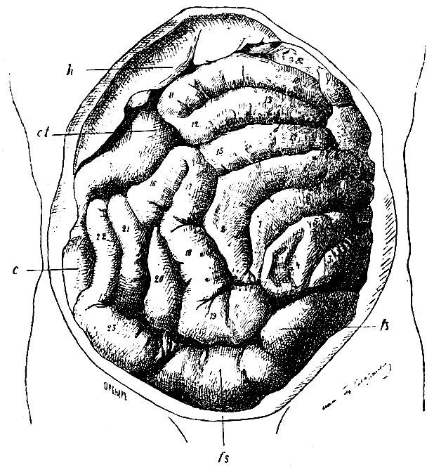 зернов руководство описательной анатомии человека скачать