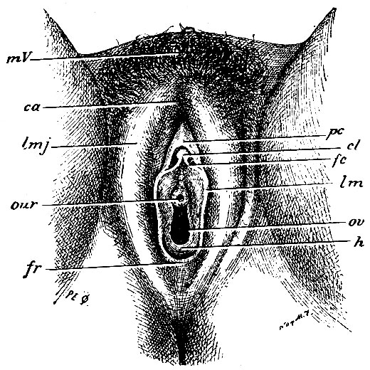Приемы женской анальной мастурбации наблюдение стороны