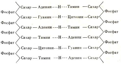 Схема химического строения