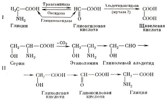 Пути синтеза глиоксиловой