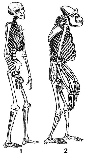 Слабость и боль в суставах рук