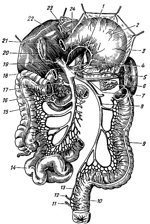 Схема формирования воротной
