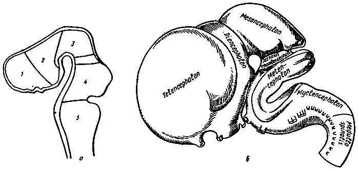 головной кальций