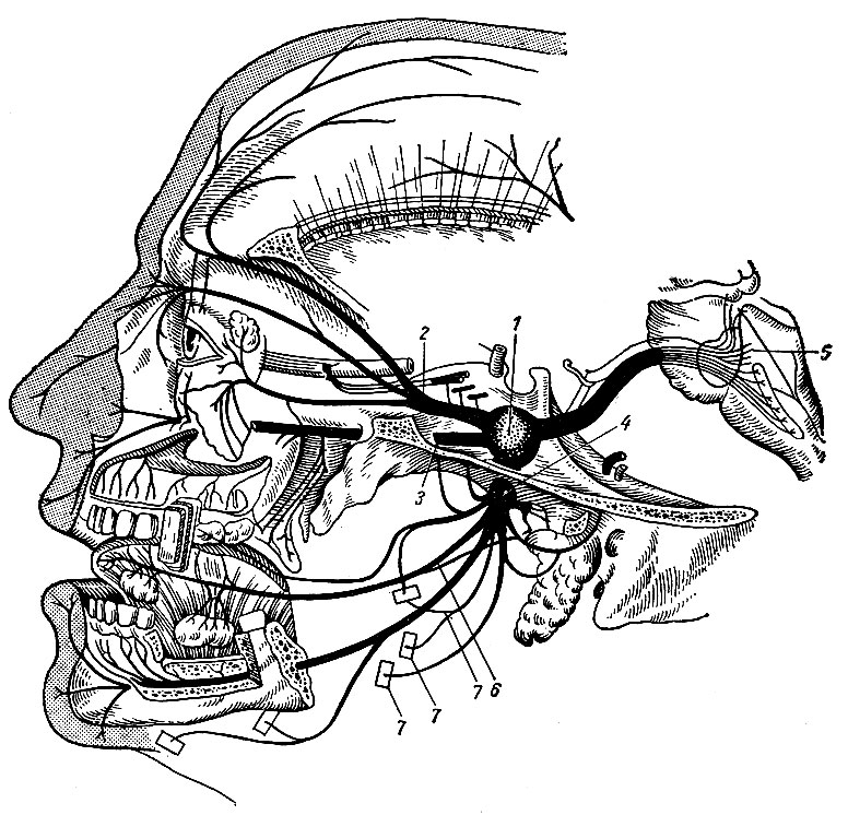 Нерв двигательный фото