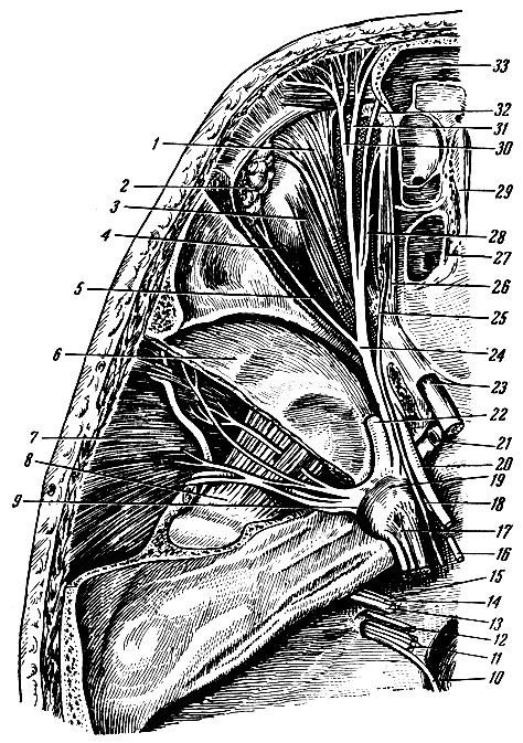 нерв схема слезный