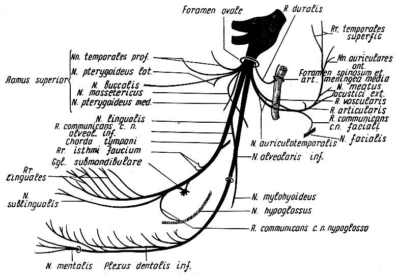 Топографическая анатомия таблица схемы