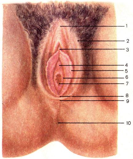 Женские половые щели фото фото 798-523