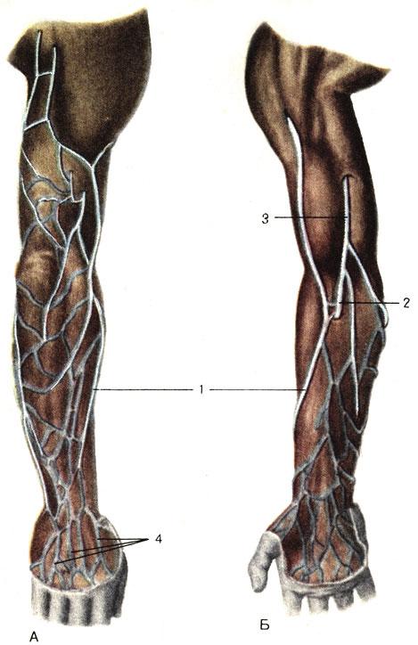 После операции по удалению вен на ногах когда можно ходить