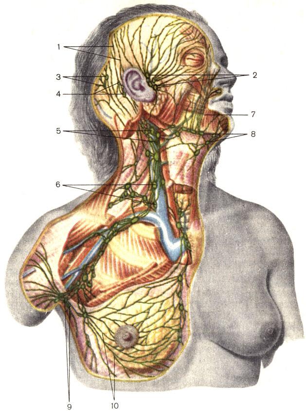 Что делать если рак предстательной железы