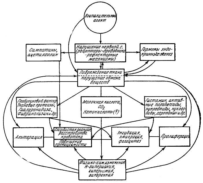 Схема возникновения и развития