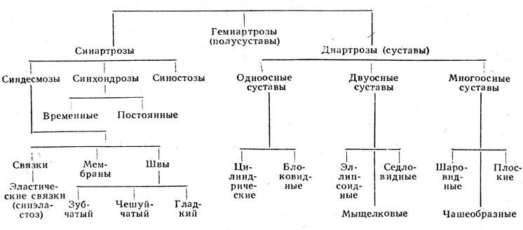 Схема соединении костей