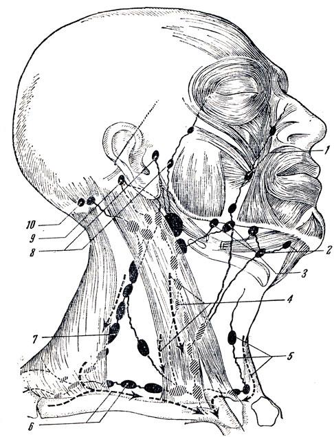 лимфатических узлов головы