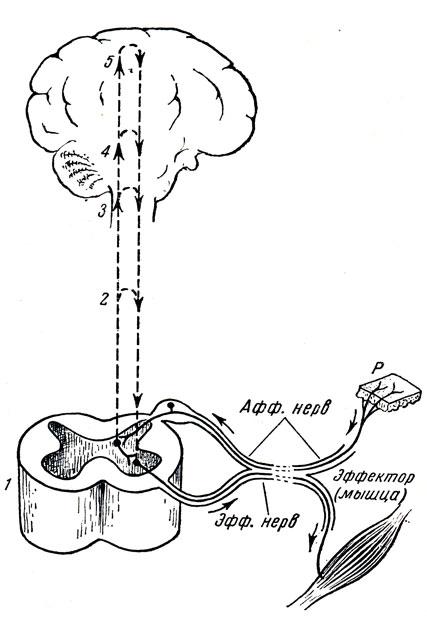 Элементарная схема