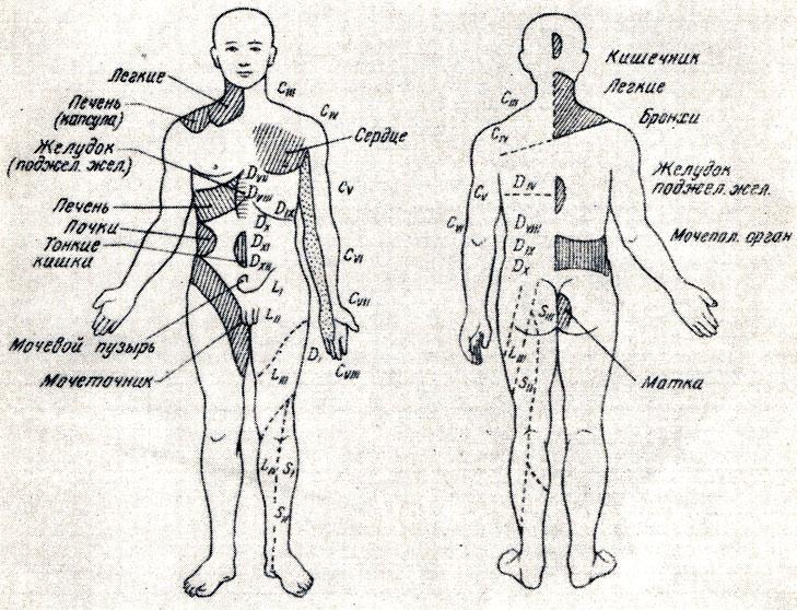 Зоны захарьина геда схема и описание