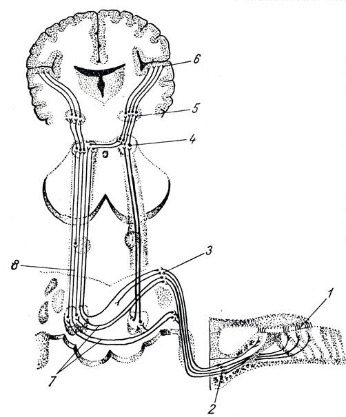 Общая схема строения звукового