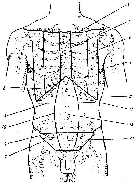 Области груди и передней