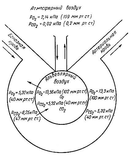 Схема диффузии газов через