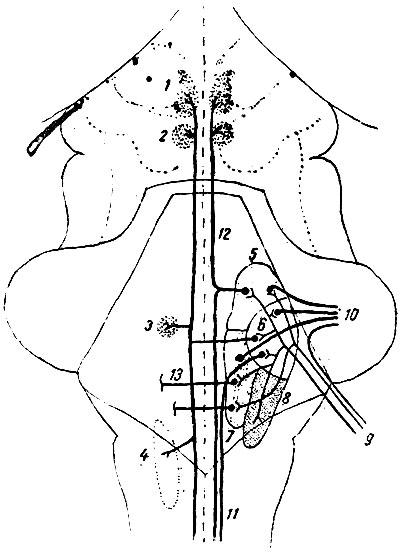 глазодвигательного нерва;