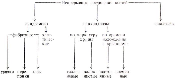 Соединения костей схемы