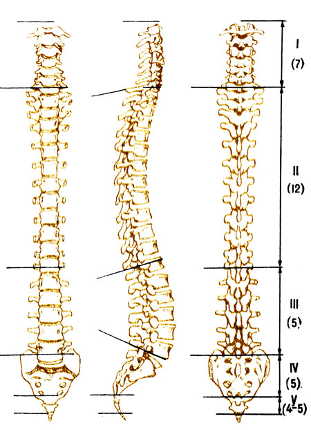 Гимнастика для плечей шеи при остеохондрозе