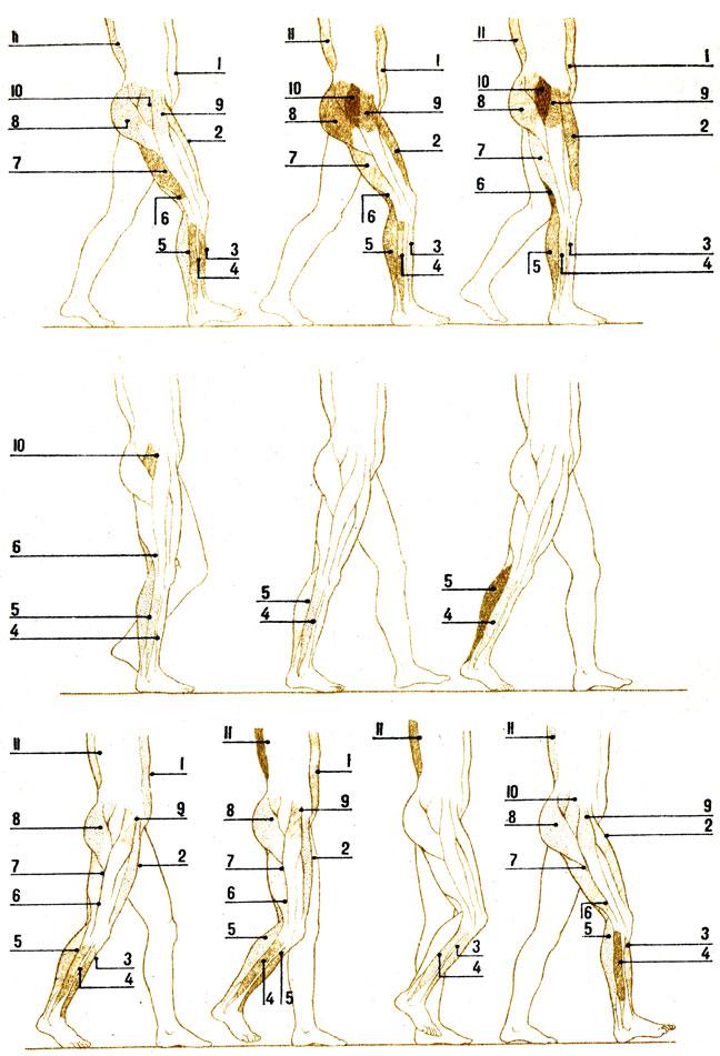 Мышечный корсет для позвоночника