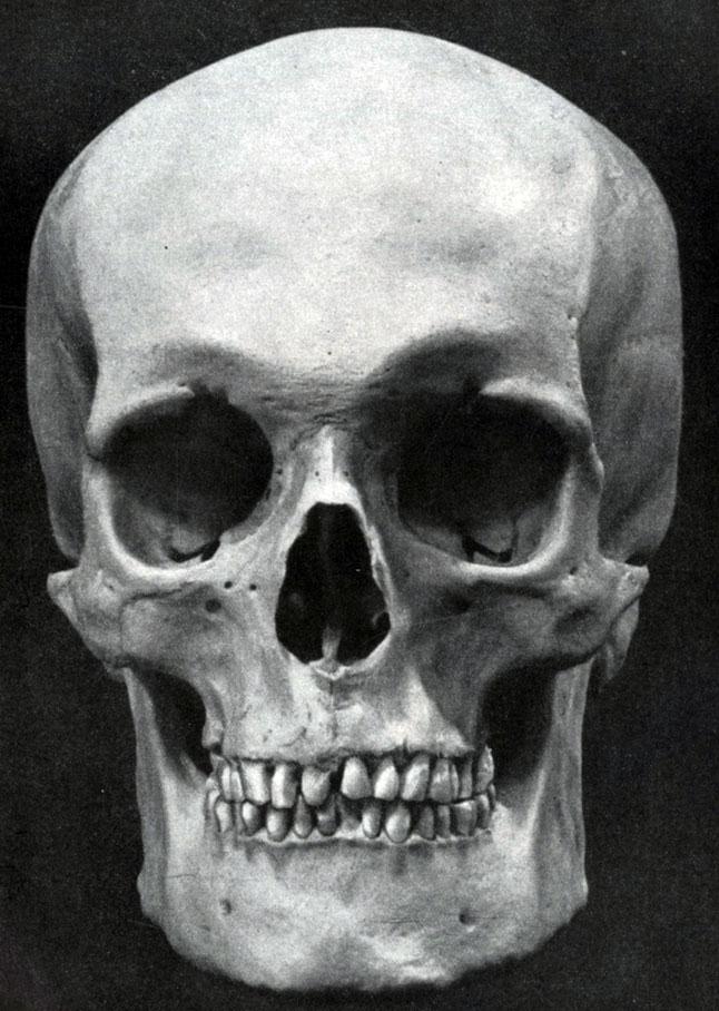 фото лобной кости