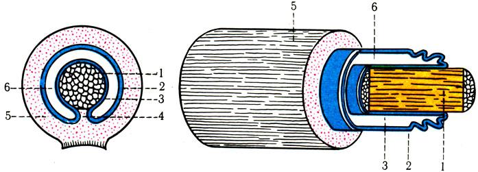 Схема строения синовиального
