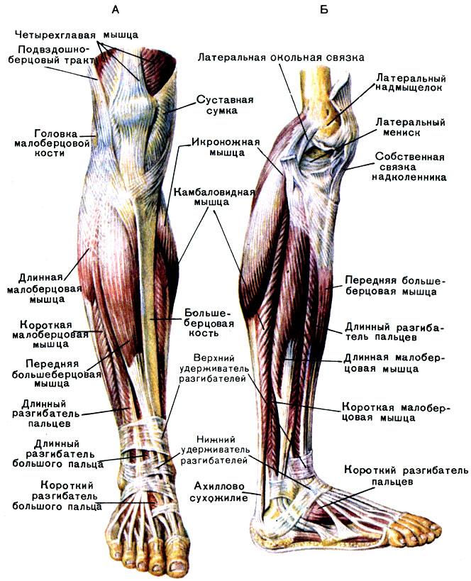 Верхние суставы ноги послеоперационная фиксация плечевого сустава